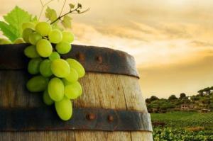 W Polsce powstaje miejska winnica; pierwsze wina za trzy lata