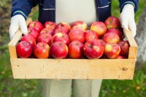 Polskie jabłka najtańsze w Europie Wsch., a eksport nie idzie