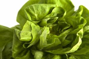Japończycy planują zautomatyzować produkcję sałaty