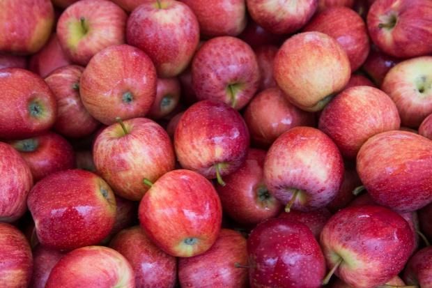 Grupa Appolonia podpisała pierwsze kontrakty na dostawę jabłek do Chin
