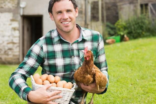 Wiejskie eko jaja mogą być trujące?
