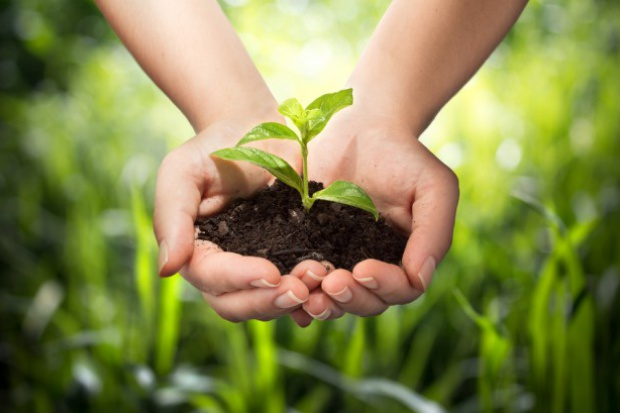 PIORIN namawia do zgłaszania produkcji rolnej w systemie IP