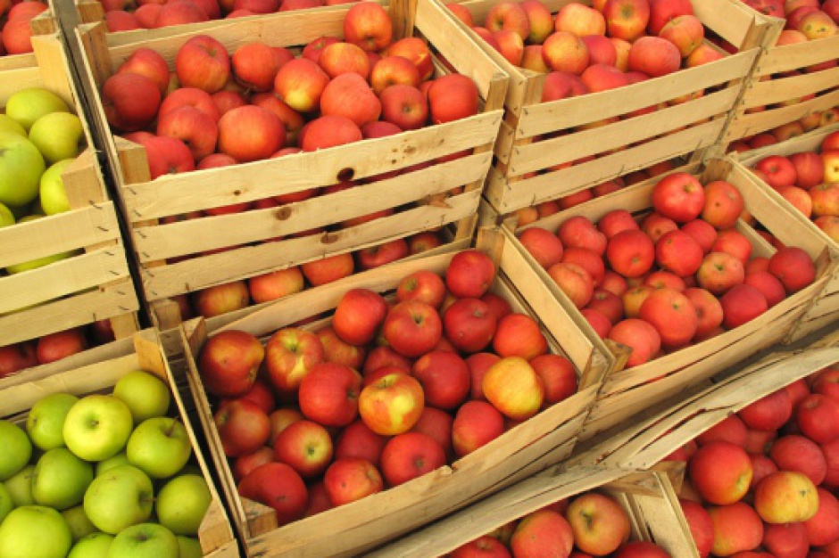 Ceny jabłek na Mazowszu nadal są niskie