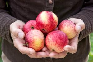 Ceny jabłek wciąż na niskim poziomie