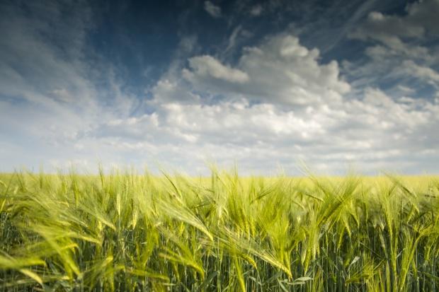 Ukraina zwiększa eksport zbóż redukując zapasy