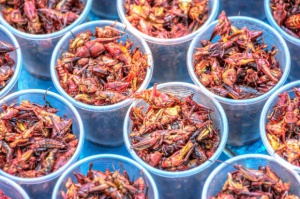 Czy owady mają szansę zagościć w codziennym menu Polaków?