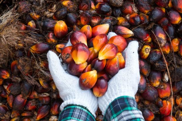 Wzrasta zużycie oleju palmowego do produkcji biodiesla