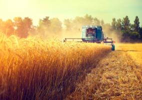 Niska wydajność pracy w rolnictwie. Polska w ogonie Unii Europejskiej