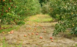Długoterminowe trendy w światowym eksporcie jabłek