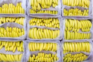 Honduras zwiększa produkcję bananów