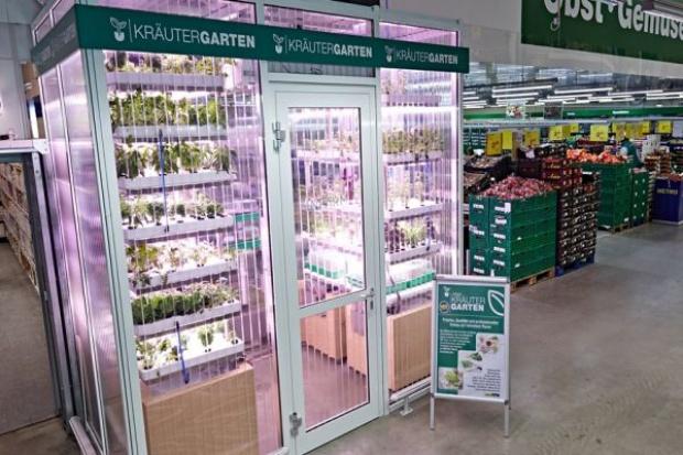 W sklepie Metro Cash&Carry powstał mini ogród z warzywami i ziołami
