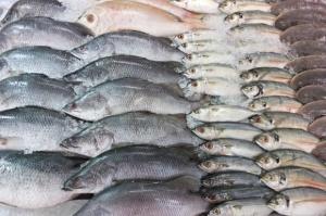 Połowy ryb na Bałtyku wyższe o blisko 14 proc.