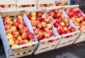 Sadownicy mają coraz mniej czasu na sprzedanie jabłek po korzystnej cenie