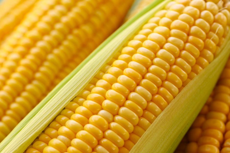 Rynek zbóż: ciąg dalszy spadków na światowych giełdach