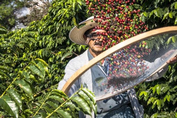 Nestlé i Jacobs kupują kawę z plantacji, które wykorzystują niewolników?