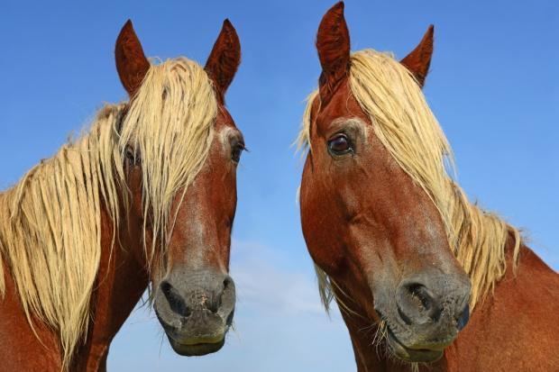 Brazylijska konina potencjalnie niebezpieczna. UE wstrzyma eksport?