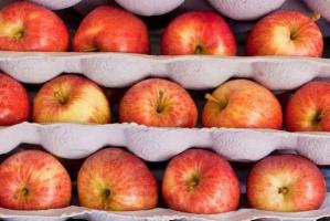 Unijne zapasy jabłek nieznacznie niższe od rekordowo wysokich sprzed roku