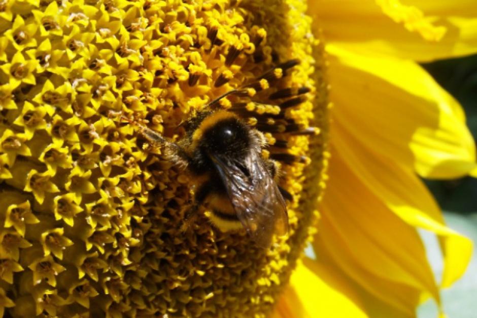 Kierownictwo MRiRW przyjęło Krajowy Program Wsparcia Pszczelarstwa