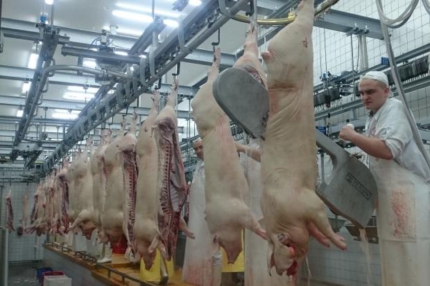 Branża mięsna: konieczna reforma szkolnictwa zawodowego!