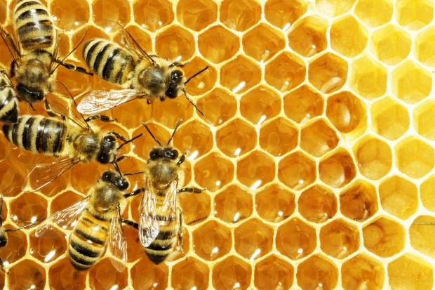 Pszczoły na Podkarpaciu w dobrej kondycji przetrwały zimę