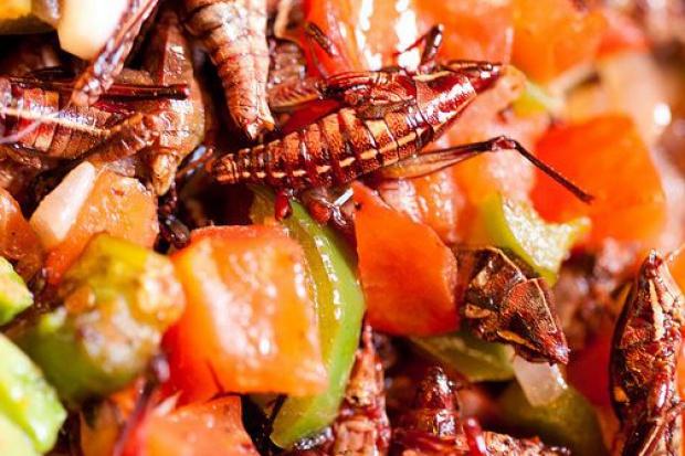 Mięso przyszłości – owady