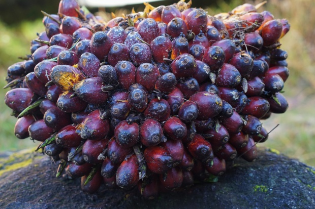 FAO: Ceny żywności stabilne, ale oleje drożeją