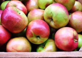 Niska cena polskich jabłek na dalekich rynkach nie robi wrażenia