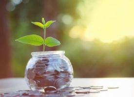 Spółka Hortico rozważa wypłatę dywidendy zaliczkowej