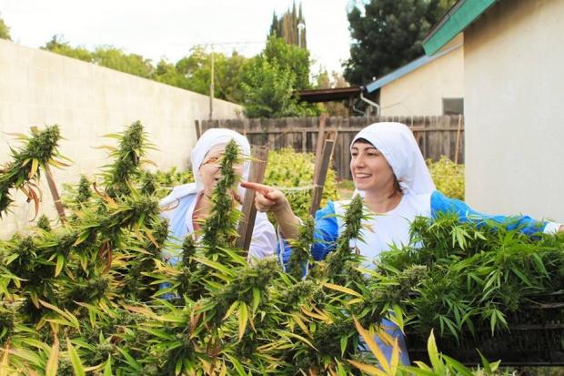 Zakonnice z USA nie mogą produkować maści i nalewek z marihuany