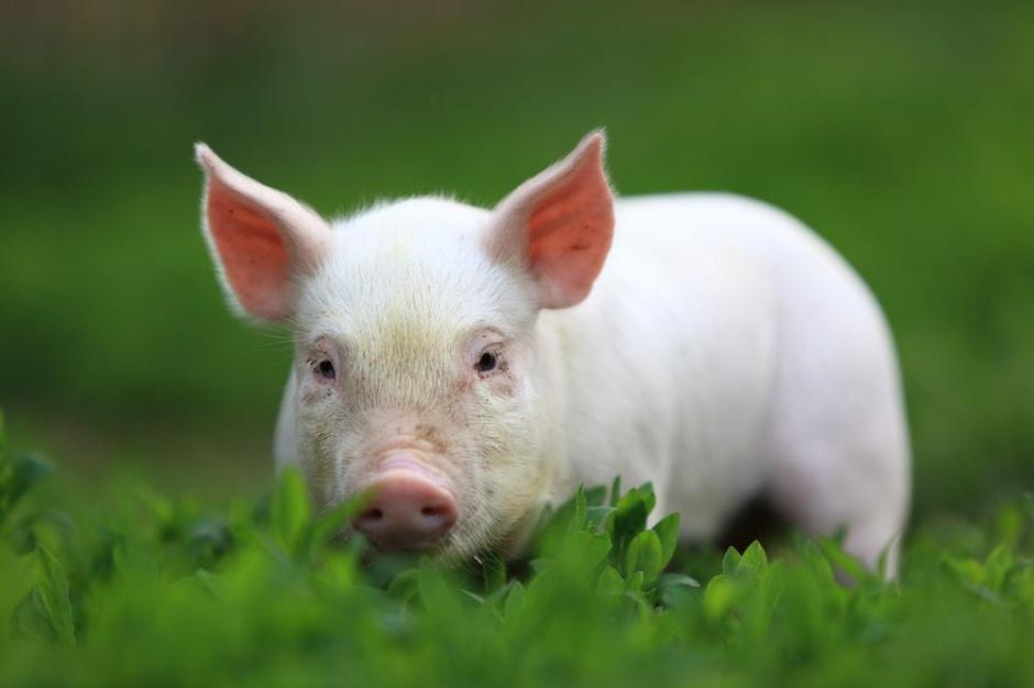 Regulacje o oznaczaniu mięsa krajem pochodzenia wpływają na wymianę handlową w UE
