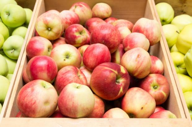 Spadł eksport niemieckich jabłek