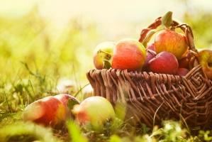 Jabłka: Sadownicy zaczynają liczyć straty