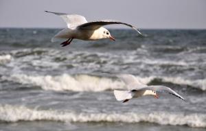 Unijni kontrolerzy: Największym źródłem zanieczyszczeń Bałtyku jest rolnictwo