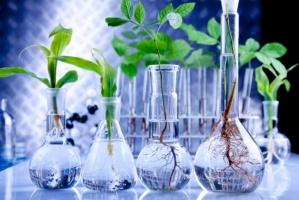 Spada powierzchnia upraw roślin GMO na świecie