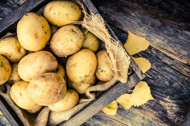 Ziemniaki droższe o blisko 80 proc.