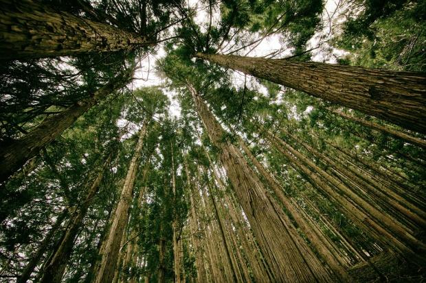 22 kwietnia obchodzimy Światowy Dzień Ziemi
