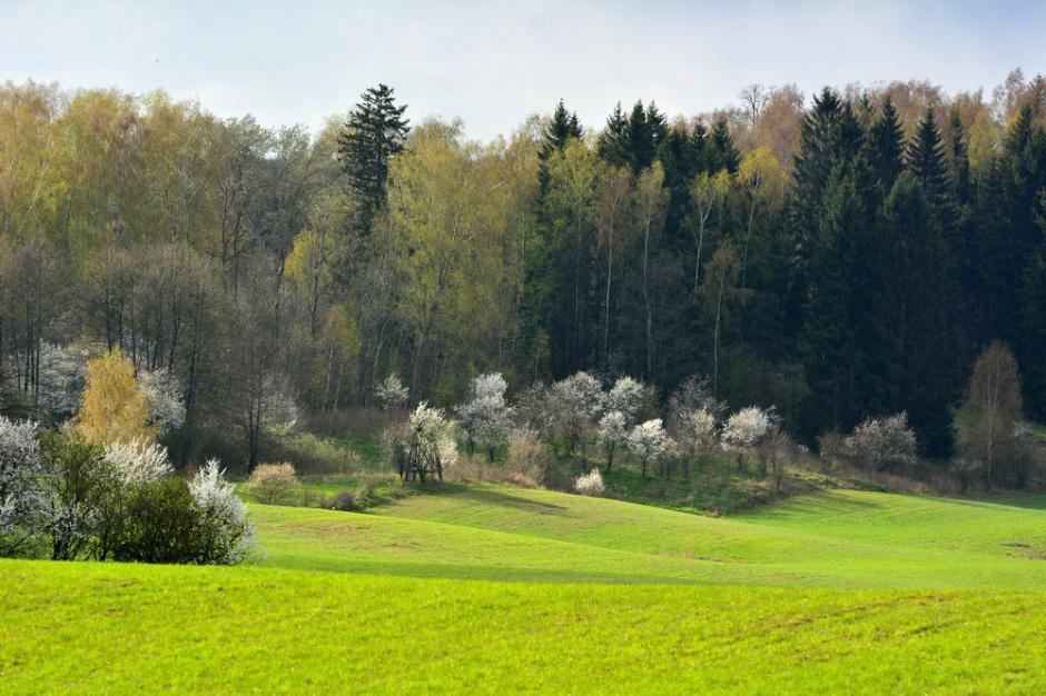 Lasy Państwowe chcą handlować emisjami CO2 pochłoniętymi przez lasy