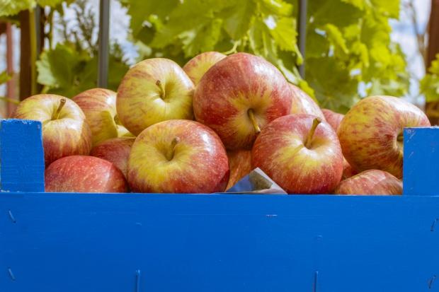 Na rynku może zabraknąć jabłek dobrej jakości