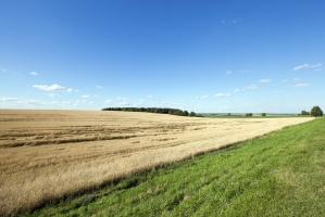 Ekspert ONZ ws. ustawy o obrocie ziemią: możliwy negatywny wpływ na jakość żywności