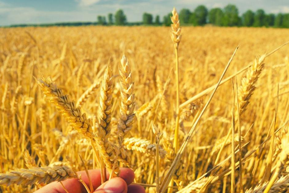 Eksport zbóż z Polski zmniejszył się o 27 proc.
