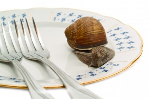 Europa zajada się ślimakami spod Pasłęka