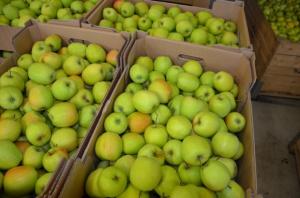 Związek Sadowników RP rozstrzygnął przetargi na promocję jabłek