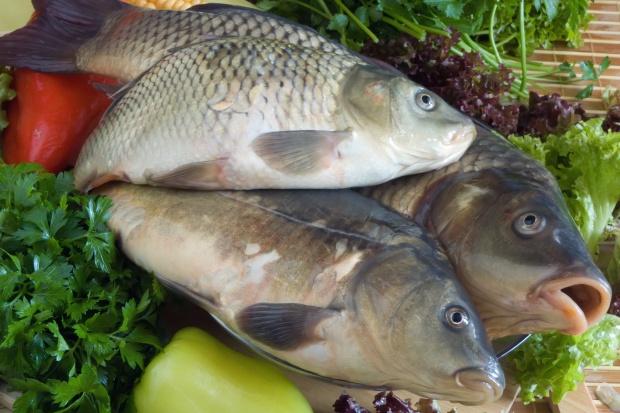 Koniec z hodowlą ryb? Nowe prawo wodne zniszczy gospodarkę rybacką!
