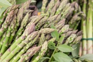 Dolnośląskie: Rozpoczęły się zbiory szparagów
