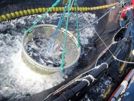 GUS: Połowy ryb wyższe o prawie 10 proc.