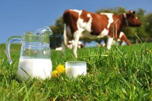 Protest producentów mleka pod Tesco w Budapeszcie