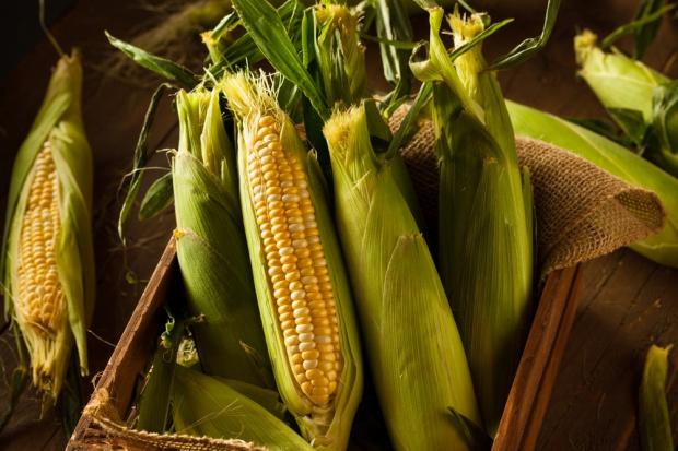 Na światowych rynkach rosną ceny kukurydzy
