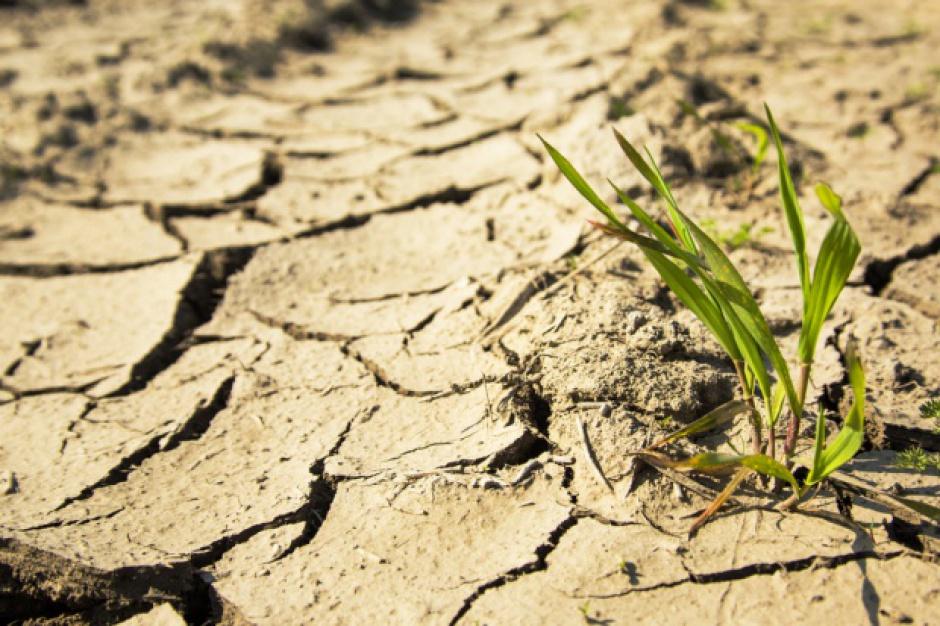 Unikatowy projekt adaptacji do zmian klimatu m.in. przeciw skutkom suszy