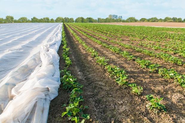 Węgry: kwietniowe mrozy mogły zniszczyć połowę owoców