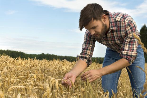 Blisko 3 tys. osób stara się o premie dla młodych rolników